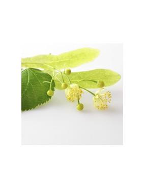 Tilleul (tilia vulgaris)